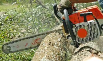 Tree Removal in Pittsburgh PA Tree Removal Quotes in Pittsburgh PA Tree Removal Estimates in Pittsburgh PA Tree Removal Services in Pittsburgh PA Tree Removal Professionals in Pittsburgh PA Tree Services in Pittsburgh PA