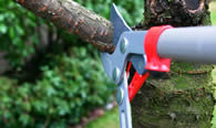 Tree Pruning Services in Pittsburgh PA