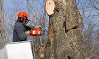 Tree Removal in Pittsburgh PA